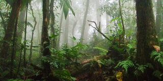 Established in 1992, Santa Elena Cloud Forest Reserve protects 765 acres of cloud forest land.