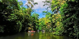 Tortuguero is an amazing destination for wildlife observation including seasonal nesting turtles.