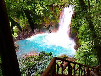 Rio Celeste and Tenorio National Park - Jacamar