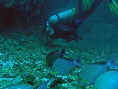 Scuba Diving Catalinas Islands - Aqua Center