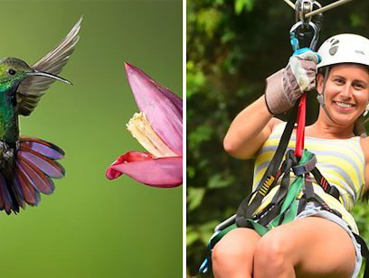 Canopy Tour Butterfly and Hummingbird Garden Combo