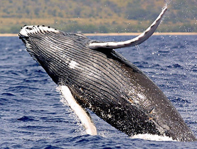 Whale and Dolphin Watching Marino Ballena National Park - Dolphin Tours