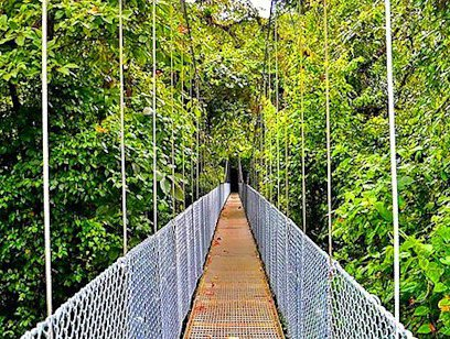 Hanging Bridges Hike at Heliconias Lodge