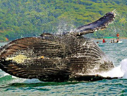 Combo Tour Snorkeling, Caves, and Whale Watching