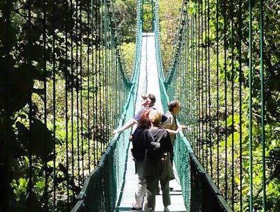 Guided Hanging Bridges with Reptile and Frog Exhibit Combo