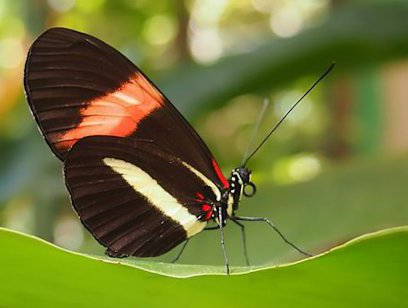 Butterfly, Hummingbird, Reptile and Frog Exhibit Combo