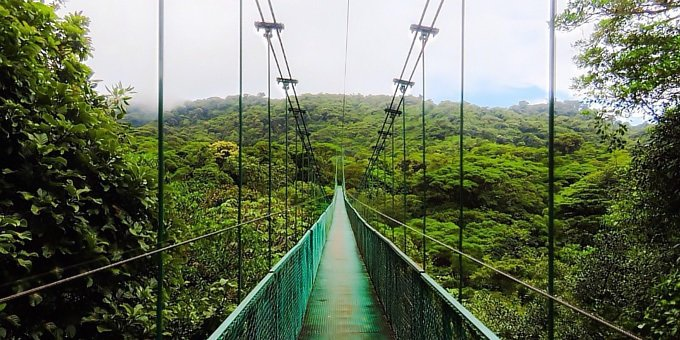 Hanging Bridges Guided Hike Tour at Selvatura