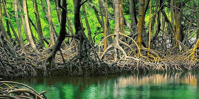 Tour to the Mangroves of Terraba