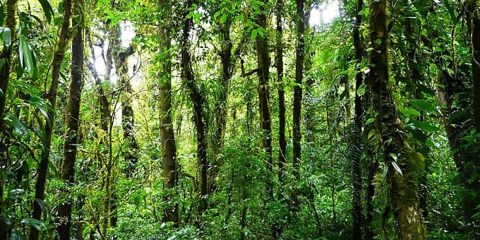 Monteverde Cloud Forest Reserve Guided Hike