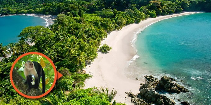Manuel Antonio National Park is Costa Rica's smallest, but most famous national park, and for good reason! The park is loaded with rare and exotic animals and also home to one of the prettiest beaches you'll ever see.
