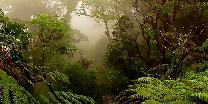 Discover the mysteries of the highland forest on the Monteverde Cloud Forest Reserve Tour.