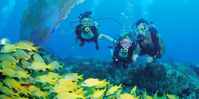 During the months of March, April, September, and October, scuba diving can be phenomenal in front of Punta Uva and Gandoca Manzanillo.