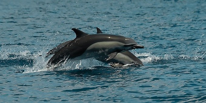 The Osa Peninsula is one of the best places in the world to observe dolphins and whales.