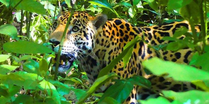 Osa Explorer Costa Rica Nature Vacation