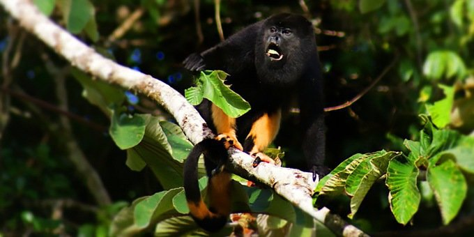 Rainforest Safari Costa Rica Nature Vacation