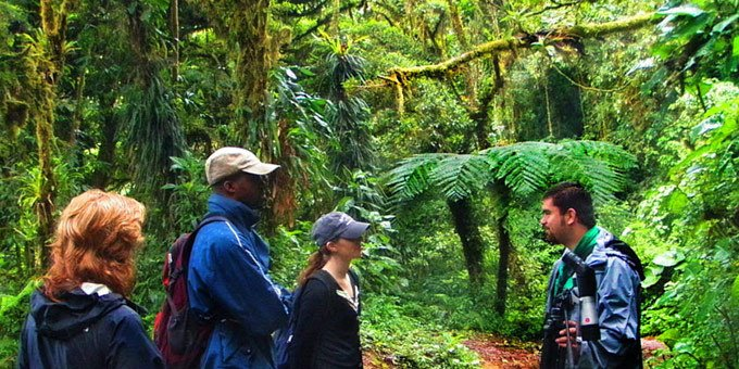 This biological reserve is home to Costa Rica's best known cloud forest. Trekking, hiking and bird watching are favorite activities with over 400 species of birds and 100 species of animals.
