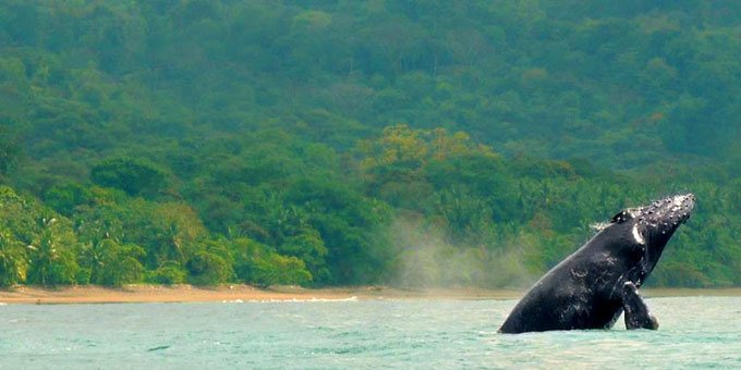 Marino Ballena National Park is located along the South Pacific coast of Costa Rica.