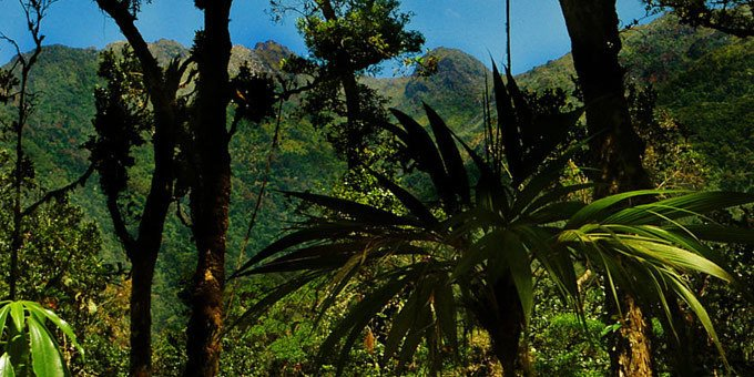 Located in the Talamanca Mountain region in the south of Costa Rica, Chirripo National Park encompasses one of the largest ecological zones in Costa Rica.