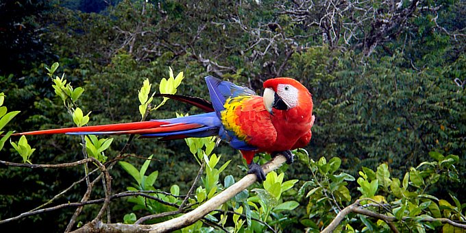 Costa Rica national parks, reserves and refuges account for an astounding 14,000 sq.