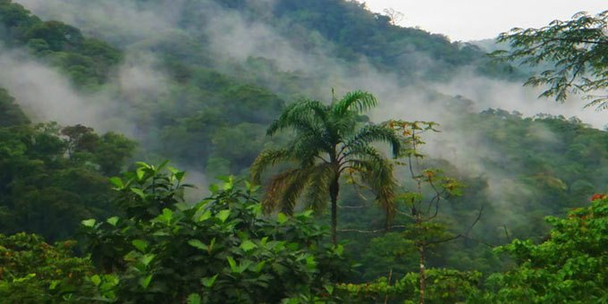 The San Lorenzo Cloud Forest is one of the most overlooked, but easily accessible cloud forests in Costa Rica.