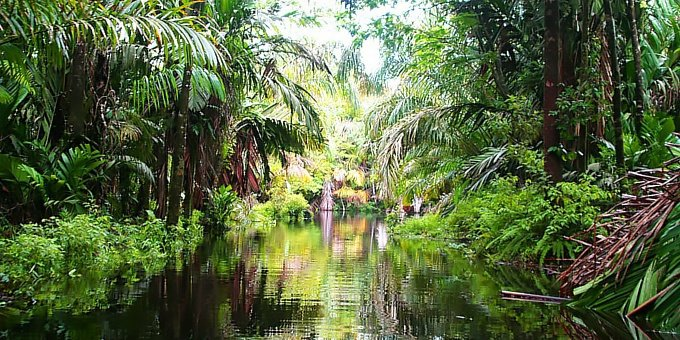 Tortuguero is located in the Northern Caribbean coast of Costa Rica which is a region of vast contrasts in weather.