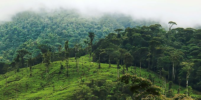 Surrounded by rainforest and cloud forest, the weather in San Isidro del General is fairly predictable.
