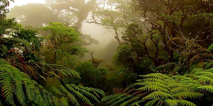 The beauty of the Monteverde Cloud Forest is amazing!