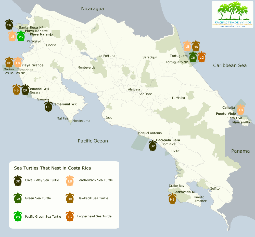 playa ostional costa rica map Costa Rica Turtle Nesting Map Where To See Sea Turtles playa ostional costa rica map