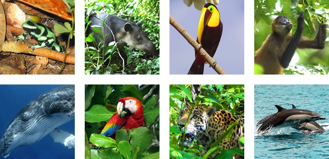 Animals that live in the South Pacific coast of Costa Rica