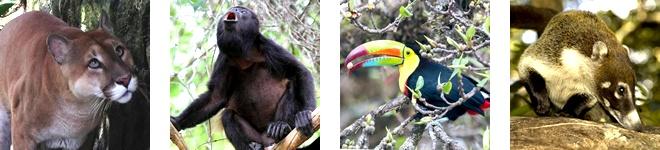 Some of the animals that live in Rincon de la Vieja