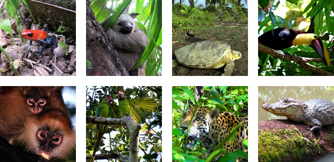 Animals that live in Tortuguero