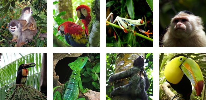 Some animals that live in Manuel Antonio