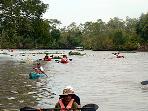 Despite the crocodiles, kayaking is a popular activity in the Sierpe Mangroves.